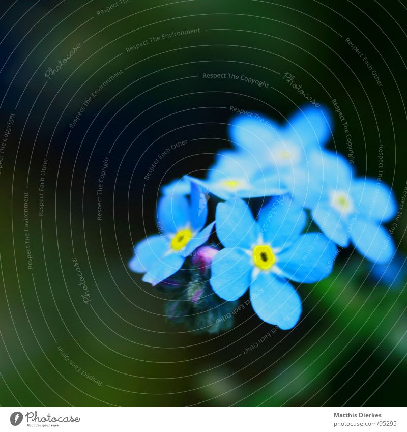 Blue Summer Flower Yellow Colour Graffiti Peace Bouquet Depth of field Brilliant Forget-me-not Sated