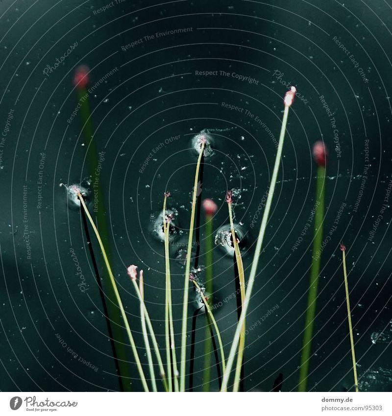Nature Water Green Plant Summer Black Dark Grass Brown Growth Round Dive Blade of grass Rod Source Straw