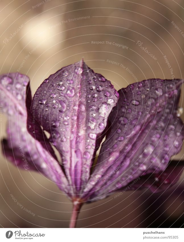 violet Flower Calm Plant Violet Brown Blossom Spring Water Drops of water Garden Nature Shadow