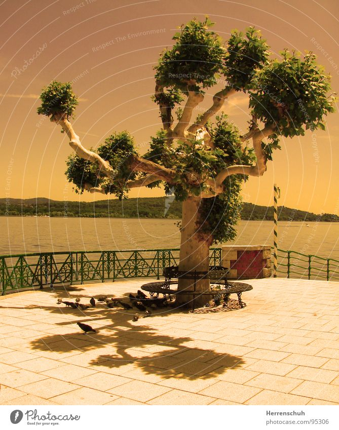 Water Tree Calm Relaxation Lake Bench Italy Piedmont Pigeon Lago Maggiore