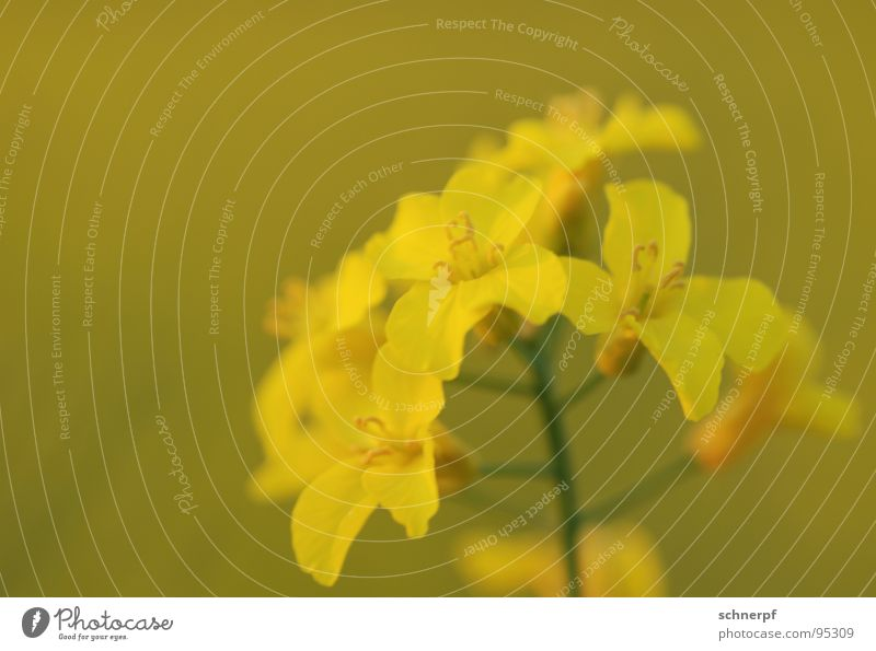 Beautiful Flower Green Plant Summer Calm Yellow Blossom Spring Crazy Force Energy industry Multiple Open Near Soft