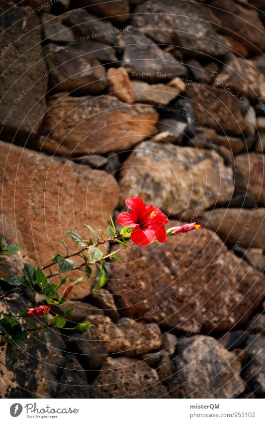 Wallflower. Nature Esthetic Contentment Flower Stone wall Growth Assertiveness Red Hibiscus Hibicus blossom Blossoming Colour photo Subdued colour Exterior shot
