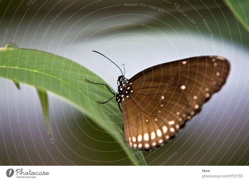 Nature Plant Green Relaxation Leaf Animal Natural Exceptional Brown Sit Stand Wait Esthetic Wing Fantastic Uniqueness