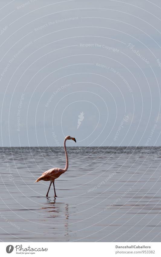 flamingo Vacation & Travel Tourism Trip Far-off places Freedom Nature Water Sky Clouds Horizon Coast Bay Ocean Lake Animal Bird Flamingo 1 Esthetic Pink
