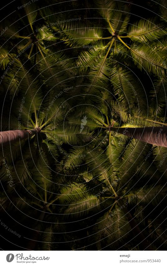 At night Environment Nature Plant Tree Foliage plant Palm tree Palm frond Dark Natural Green Colour photo Exterior shot Structures and shapes Deserted Night