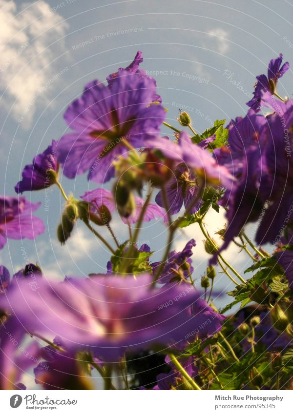 Sky Flower Green Blue Plant Meadow Spring Growth Violet Plantlet Photographic technology Sprout Wild plant Meadow flower Cotton wool clouds