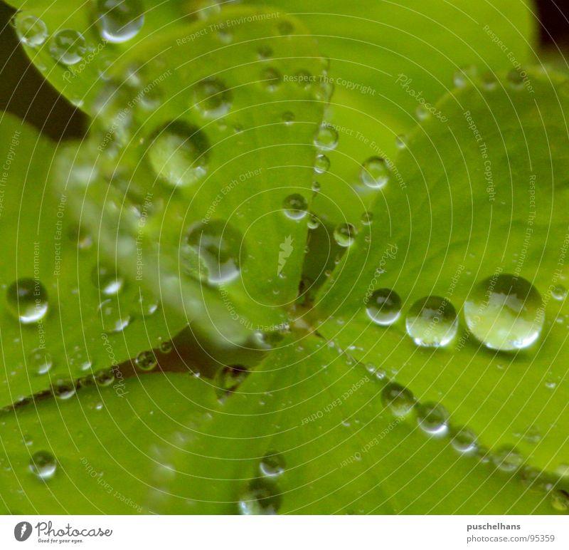 Nature Water Green Plant Happy Rain Wet Fresh Transparent Magnifying glass Clover Cloverleaf