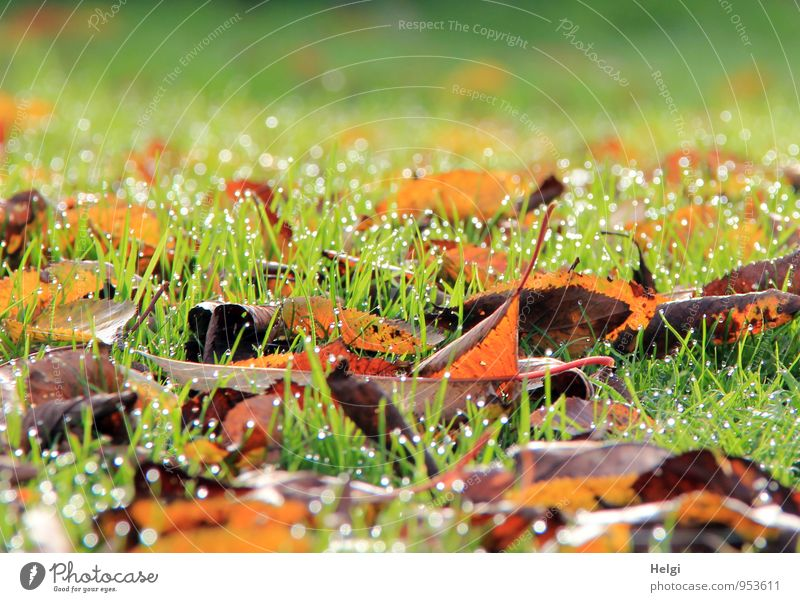 Nature Plant White Leaf Landscape Calm Environment Cold Yellow Life Autumn Grass Natural Gray Garden Brown