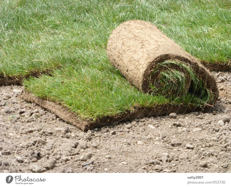 unrollable Plant Earth Grass Garden Park Meadow Natural Brown Green Stress Moving (to change residence) Rolled up coiled plants planting Colour photo
