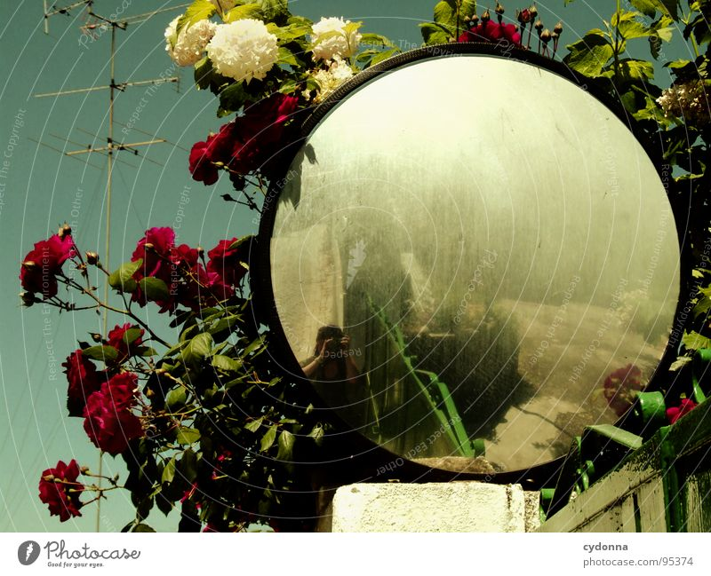 Come In And Find Me Portugal Decline Vacation & Travel Discover Foreign Alley Summer Romance Beautiful Curiosity Optimism Mirror Flower Antenna Reflection
