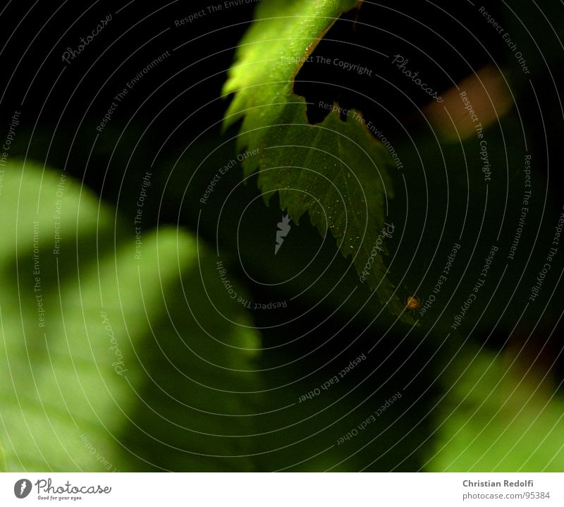 spider Nature Green Yellow Spider Leave Rachis