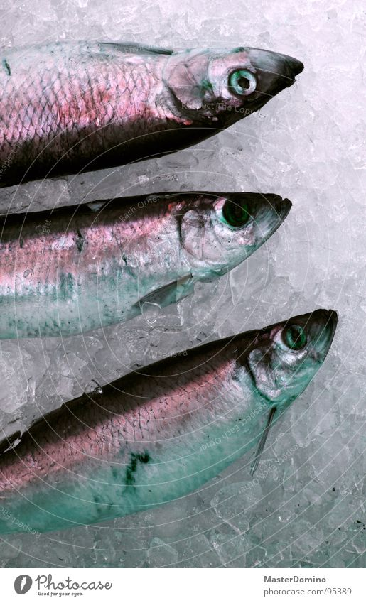 Ocean Eyes Death Food Lake Ice Fresh Nutrition 3 Fish Navigation Fishery Sell Seafood Marine animal Ice cube
