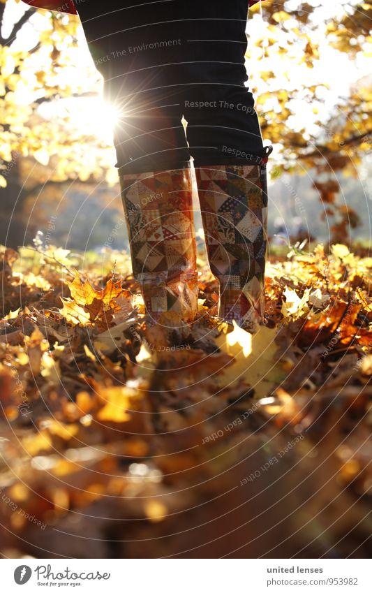AK# Sunboots Art Environment Nature Landscape Plant Esthetic Contentment Fashion Autumn Autumn leaves Autumnal colours Early fall Autumnal weather Automn wood