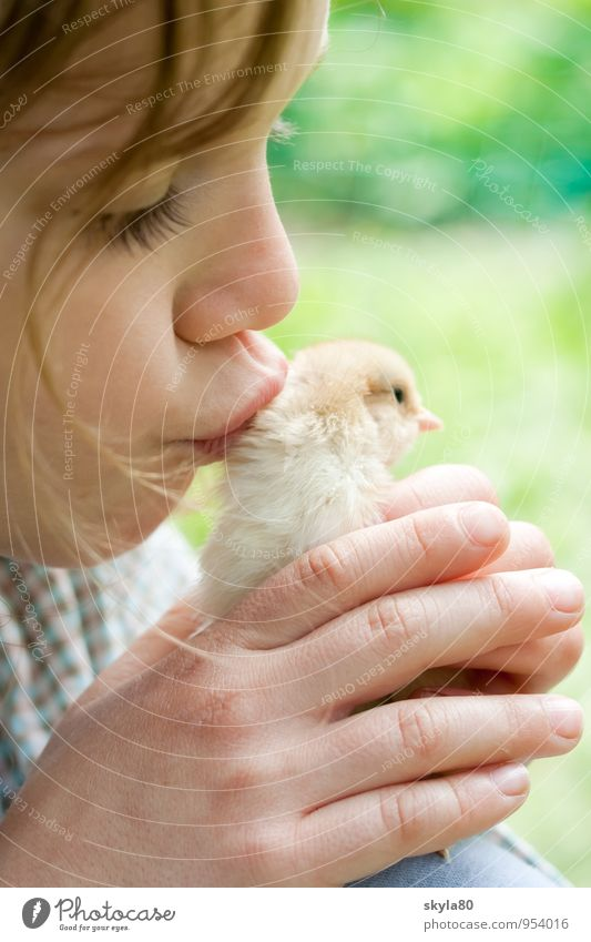 love of animals girl Child Joy Infancy Childhood memory Hair and hairstyles Barn fowl Chick Love of animals To hold on Safety Safety (feeling of) by hand Warmth