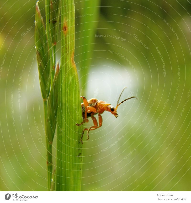 Nature Green Animal Black Small Orange To hold on Climbing Insect Blade of grass Beetle Shorts Mountaineering Crawl Feeler Diligent