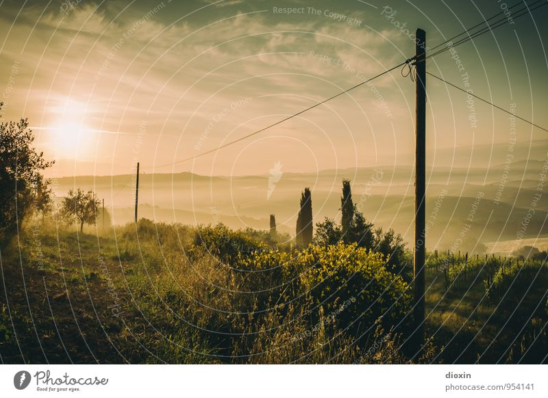 Tuscia {4} Harmonious Relaxation Calm Vacation & Travel Tourism Far-off places Summer Summer vacation Sun High voltage power line Environment Nature Landscape