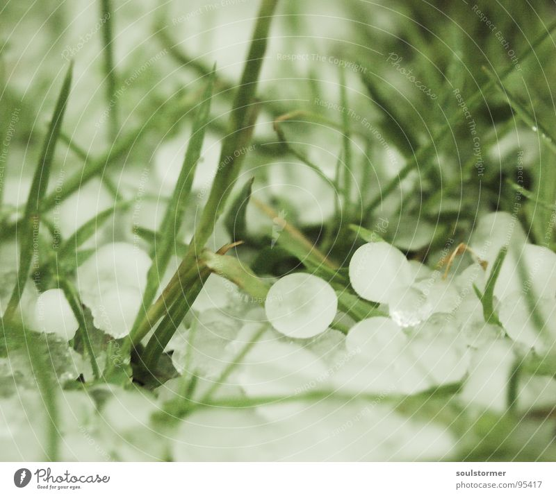 Nature White Green Dark Snow Meadow Grass Spring Rain Ice Weather Wet Rope Dangerous Lawn Threat