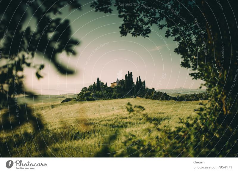 Tuscia {5} Harmonious Relaxation Calm Vacation & Travel Tourism Summer Summer vacation Environment Nature Landscape Sky Plant Tree Cypress Field Hill Tuscany