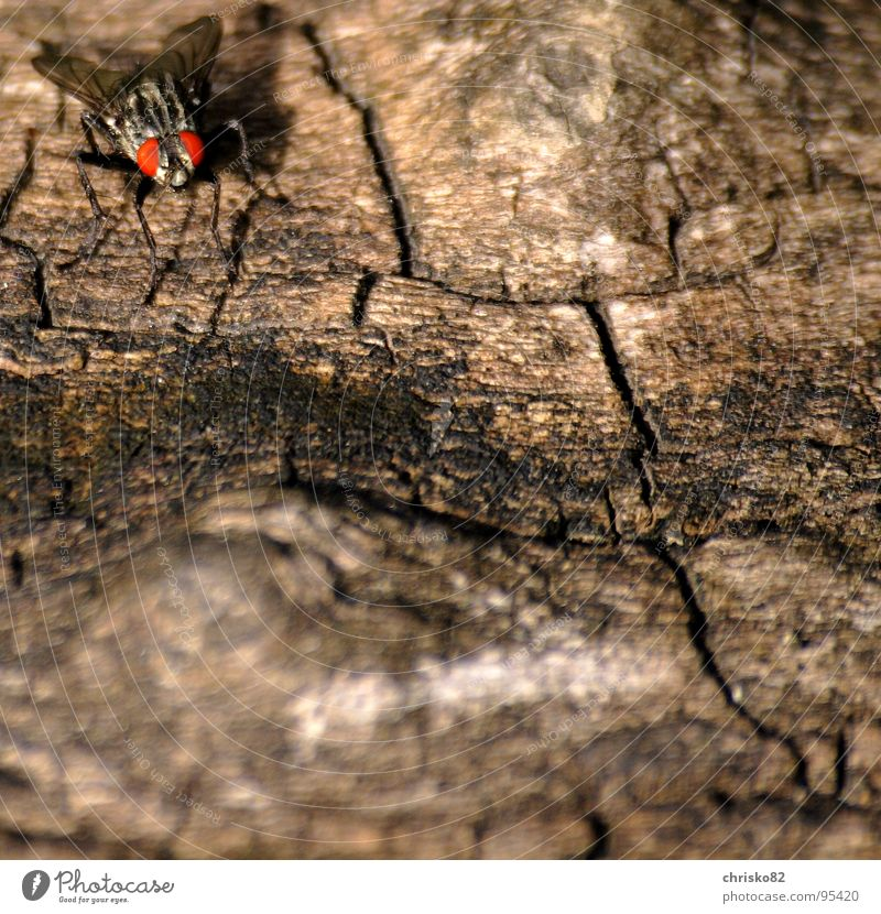 Stealth bomber Insect Wood Camouflage Gun sight Crawl Bothersome Fly Mucha Eyes Wing Wood grain Flying Calculation