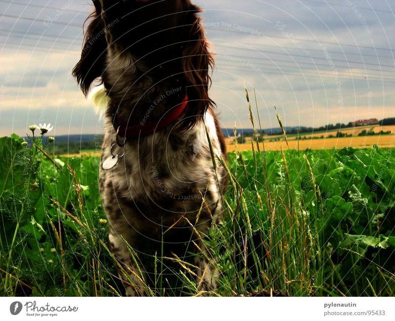 Green Blue Animal Meadow Dog Landscape Field Mammal Pet