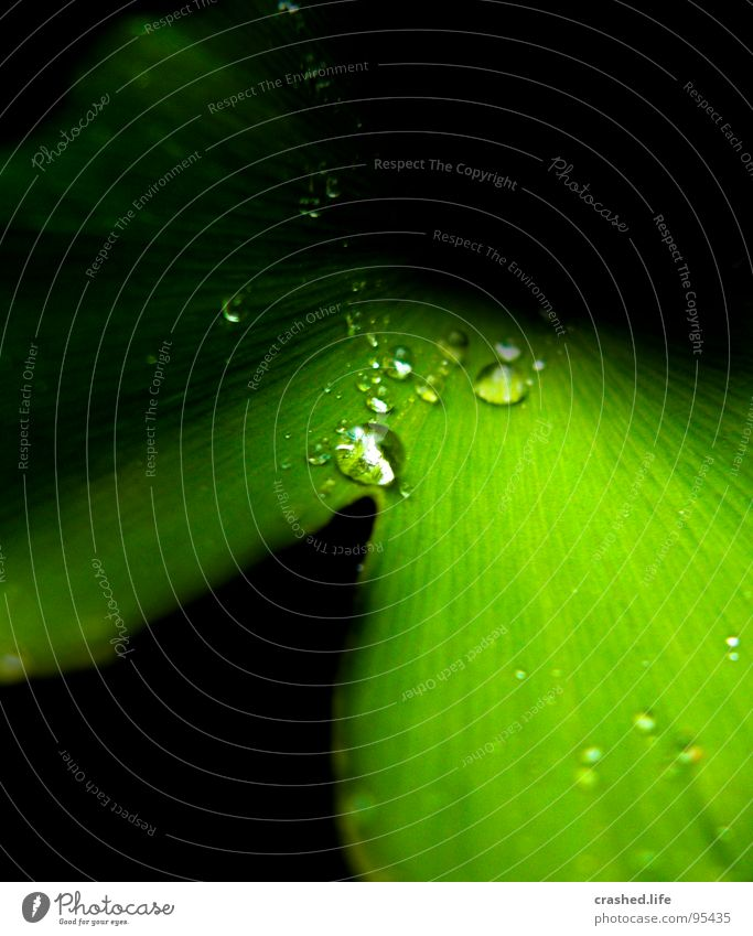 Nature Plant Green Water Black Garden Rain Drops of water Wet Clarity Near Tunnel Crystal structure Striped Damp Lettuce