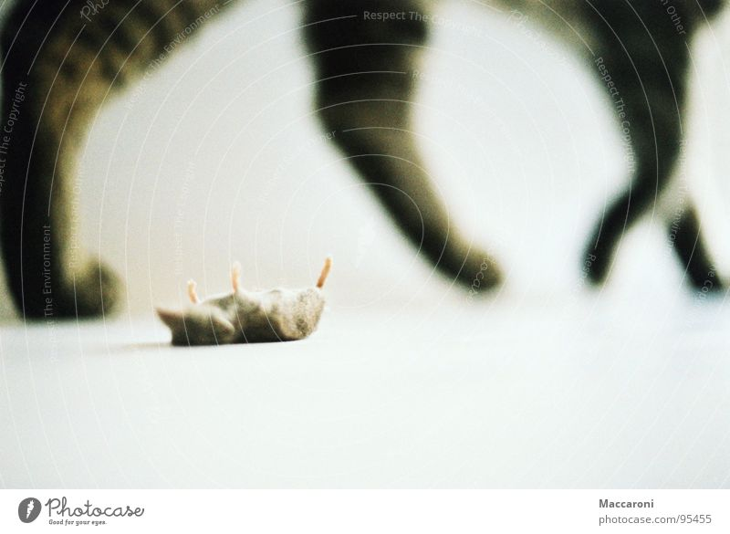 Cat White Death Gray Feet Background picture Lie Walking Back Nutrition Pelt Toys Mammal Boredom Stomach Paw