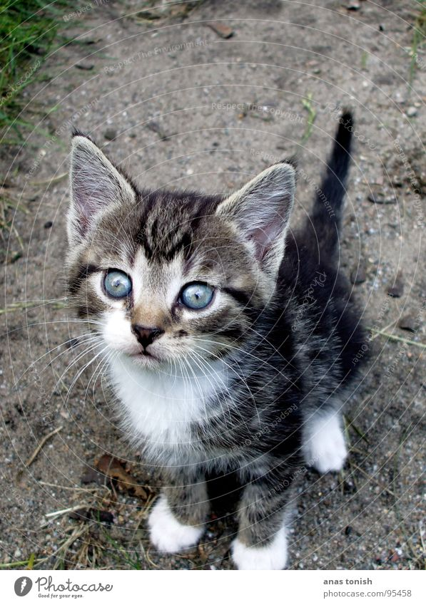 Your blue eyes... Cat Small Cute Pelt Doomed Loneliness Pet Meow Search Innocent Mammal Baby animal Kitten Domestic cat Exterior shot Animal portrait Whisker