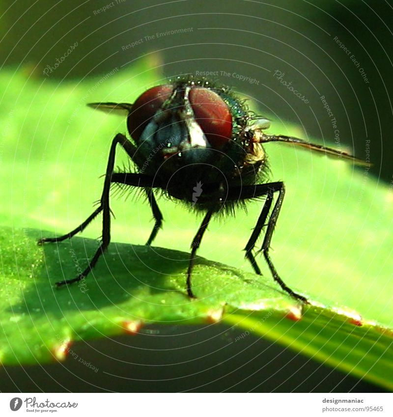 Nature Green Red Plant Leaf Black Animal Garden Legs Brown Small Wait Fly Near Wing