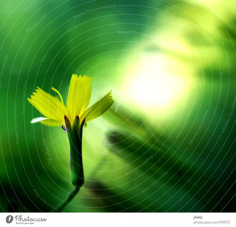 clearing Light Point of light Awareness Washed out Blossom Bushes Flower Growth Glittering Yellow Green Blur Delicate Fragile Plant Meadow Background picture