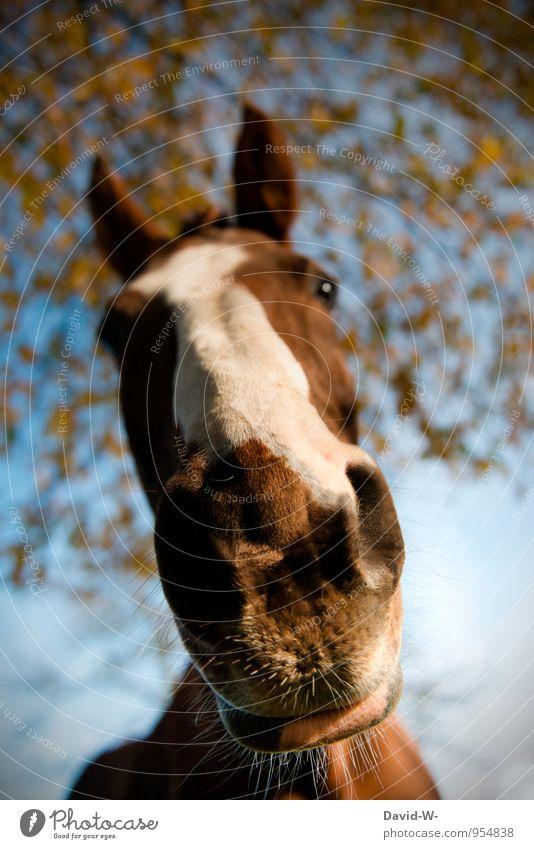 Schnute of the mare Luxury Elegant Joy Leisure and hobbies Ride Vault Vacation & Travel Trip Adventure Equestrian sports Racecourse Zoo Brunette Bangs