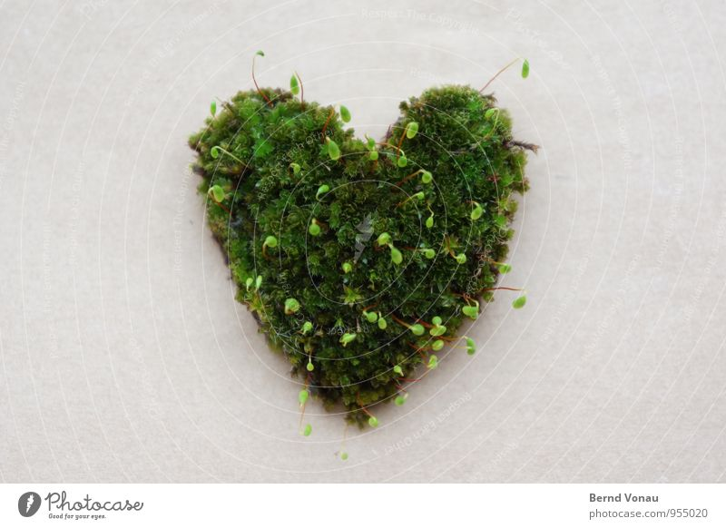 Kind regards ... Beautiful Plant Moss Paper Love Growth Green Spore Shoot Heart-shaped Gray Nature Exceptional Symbols and metaphors Silhouette Colour photo