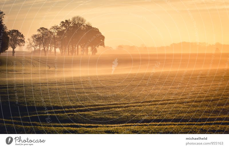 When the sun and the fog ... Environment Nature Landscape Sunrise Sunset Sunlight Autumn Tree Field Emotions Contentment Power Romance Patient Calm Self Control