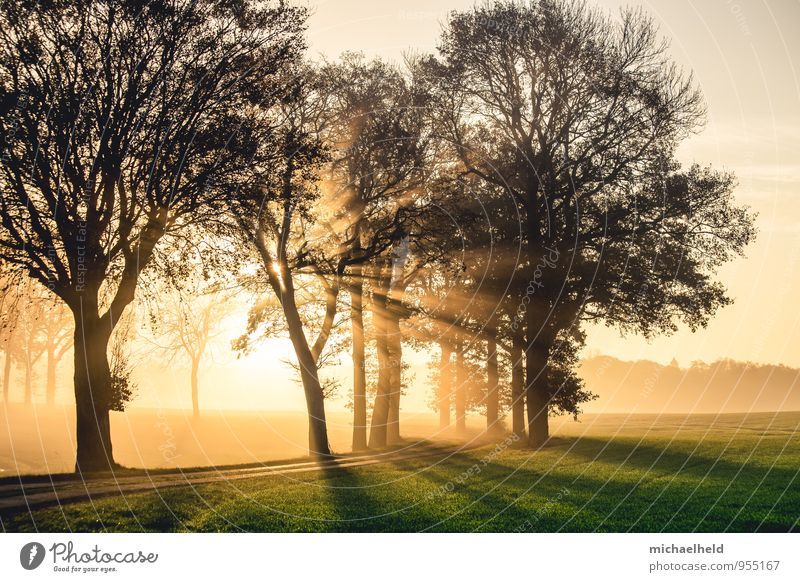 Breakthrough 1 Environment Nature Landscape Sun Sunrise Sunset Sunlight Autumn Tree Field Forest Schleswig-Holstein Emotions Moody Happy Trust Truth Hope Belief