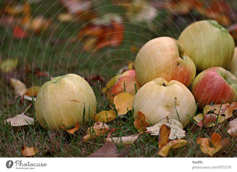 vitamins Food Fruit Apple Dessert Nutrition Organic produce Vegetarian diet Diet Vegan diet Healthy Eating Vitamin-rich Vitamin C Autumn Apple harvest Garden