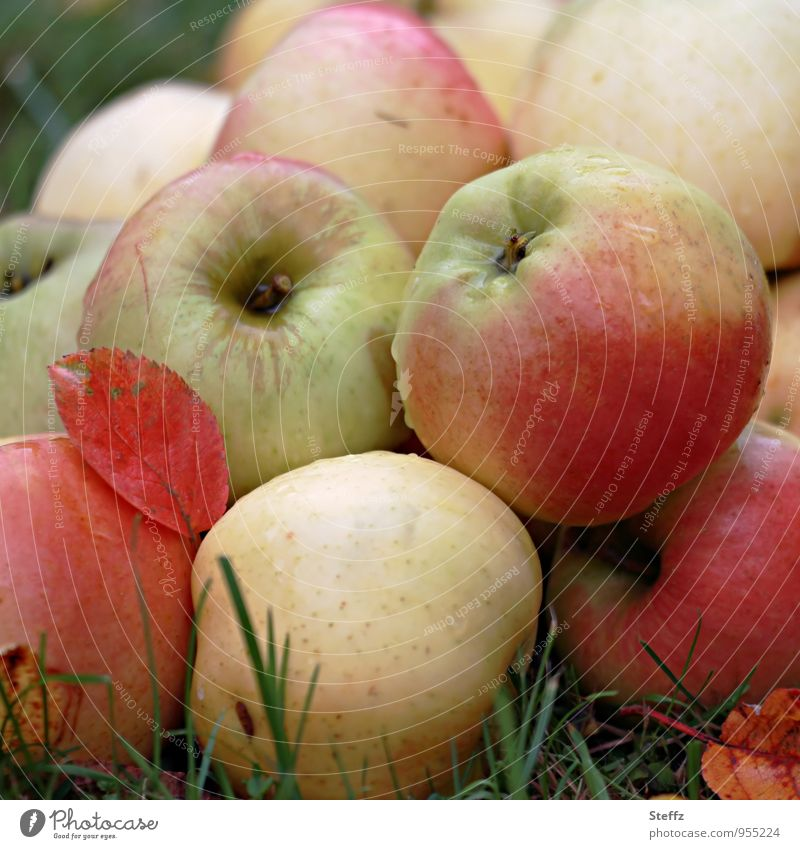 apples Vegetarian diet Diet Vegan diet Healthy Eating Apple Fruit Fruit garden Nature Colour photo Exterior shot Deserted Day Blur Shallow depth of field