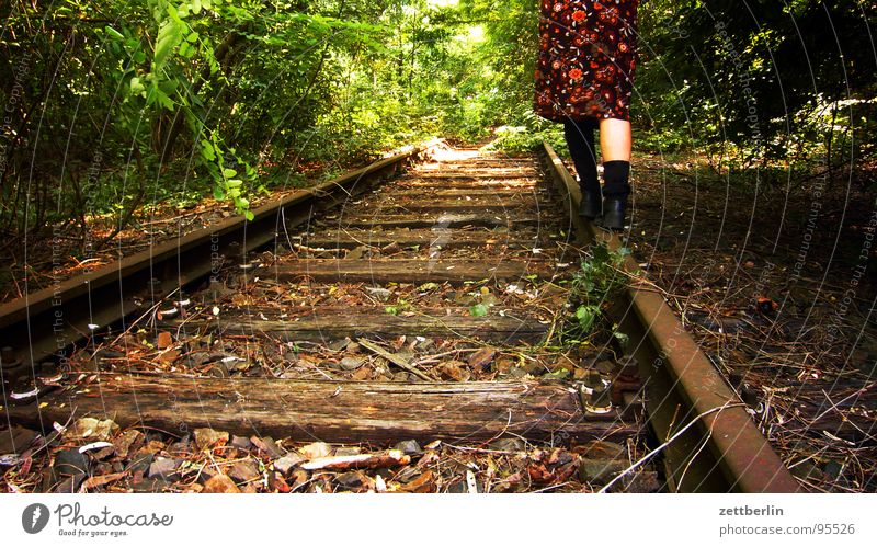 Tree Summer Joy Forest Relaxation Park Contentment Walking Hiking Transport Dangerous Bushes Threat To go for a walk Mysterious Railroad tracks
