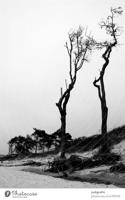 western beach Wind cripple Tree Ocean Coast Beach Gale Forest Black White Fischland-Darss-Zingst Western Beach Gray Black & white photo Landscape Baltic Sea