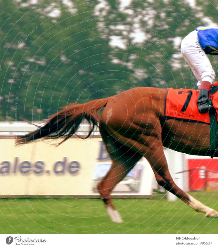 Sports Playing Running Horse Hind quarters Racecourse Musculature Animal Horse's gait Horseracing