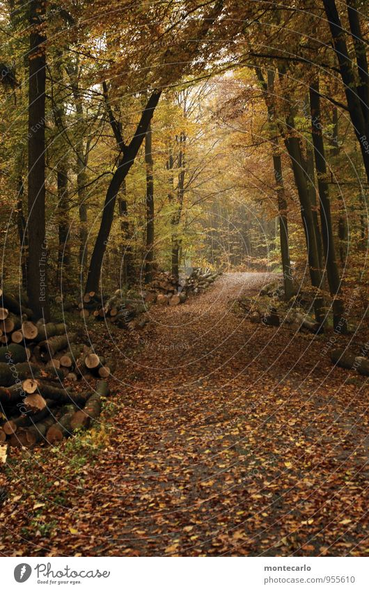 off to the woods Environment Nature Plant Earth Autumn Weather Bad weather Rain Foliage plant Wild plant Woodground Tree trunk Leaf Forest Discover Looking