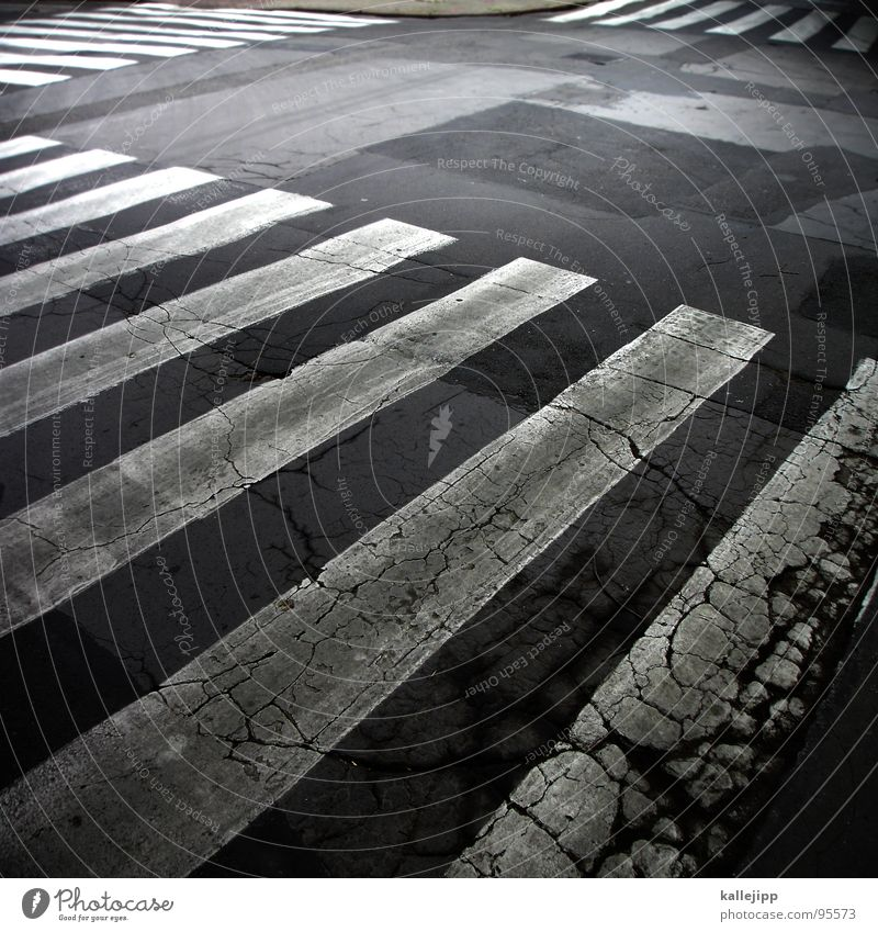 zebra Zebra Zebra crossing Stripe Pedestrian crossing Yield sign Transport Traffic regulation Dangerous Tokyo Asphalt White Szczecin Traffic lane Tar