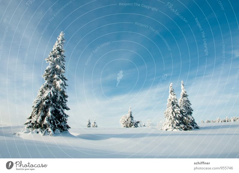 Sky Nature Blue Plant Tree Landscape Clouds Winter Cold Environment Snow Ice Multiple Beautiful weather Tilt Frost
