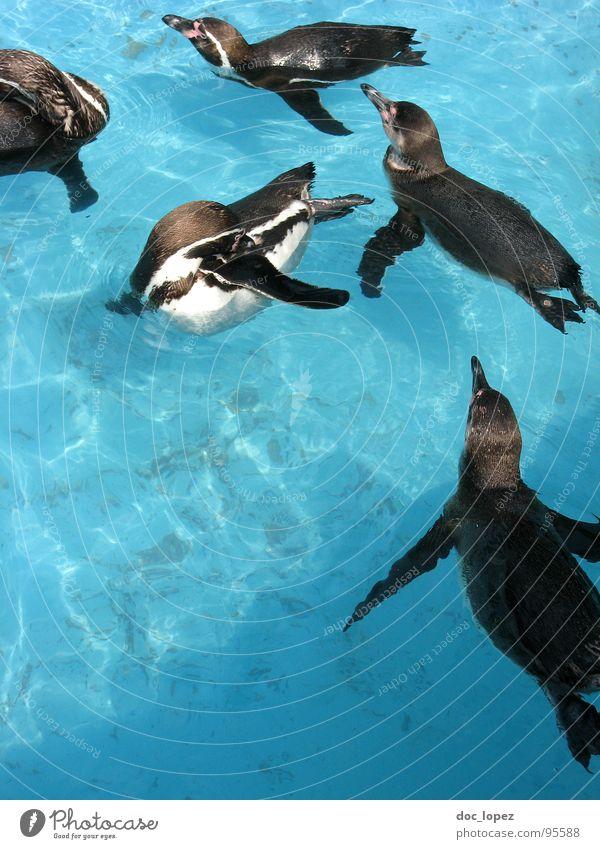 Water Navigation Penguin Flock Pack Band together