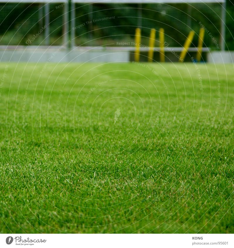 Green Meadow Sports Playing Grass Energy industry Lawn Playing field Depth of field Ball sports Cottbus Sporting grounds Green space