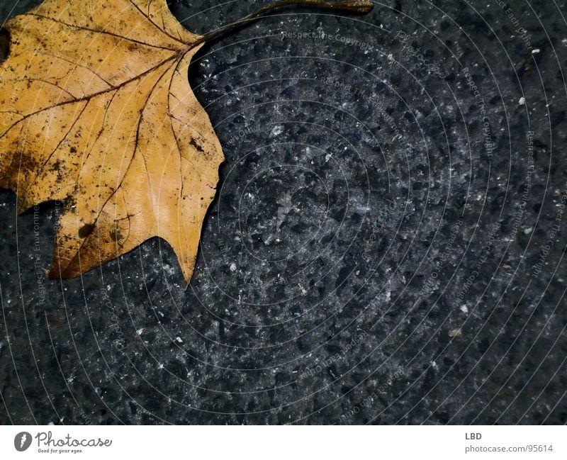 Nature Leaf Black Loneliness Yellow Street Colour Dark Autumn Death Gray Stone Orange Empty Asphalt Decline