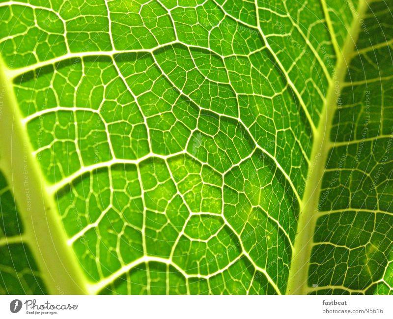 Green Leaf Energy industry
