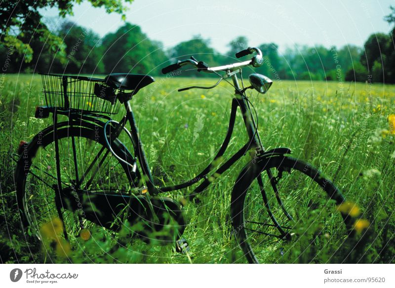 Green Vacation & Travel Joy Meadow Park Bicycle Break Romance Seventies Sixties Netherlands Cycling tour Motorcyclist Cycle race Bicycle chain Bicycle fittings