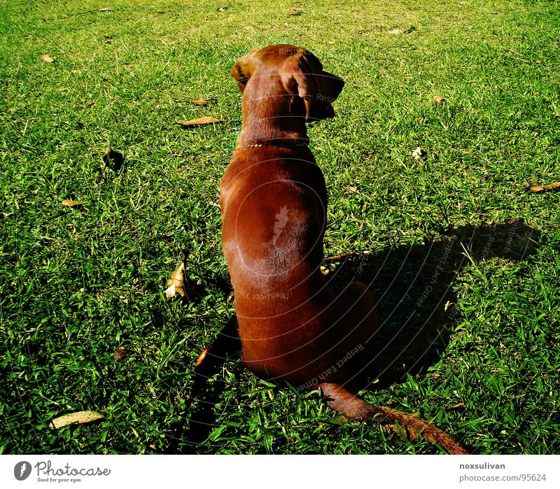 Dog Green Leaf Calm Autumn Playing Grass Lawn Peace Concentrate Testing & Control Obedient Animal