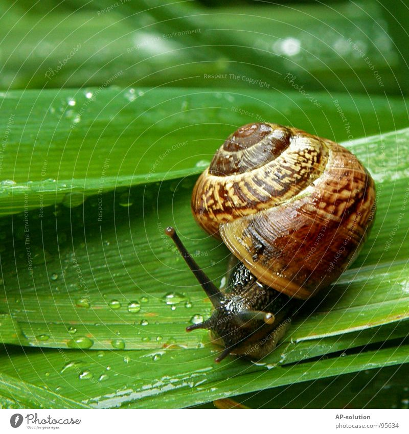 Nature Green Animal House (Residential Structure) Eyes Life Grass Rain Wet Speed Drops of water Living thing Damp Spiral Snail Smoothness