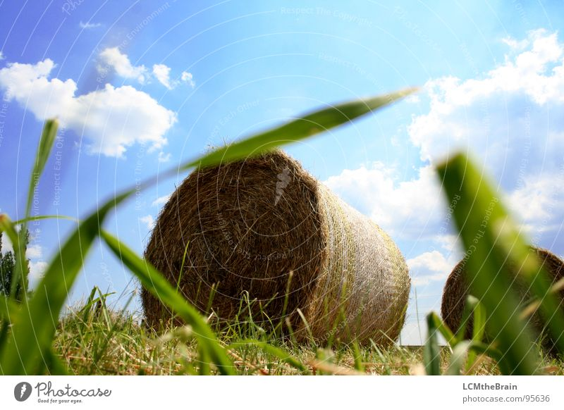 Hay Vs. Tractor Hay bale Summer Straw Bale of straw Grass Field Yellow Agriculture Clouds Exterior shot Village Meadow Calm Nature Sky Field recording Blue