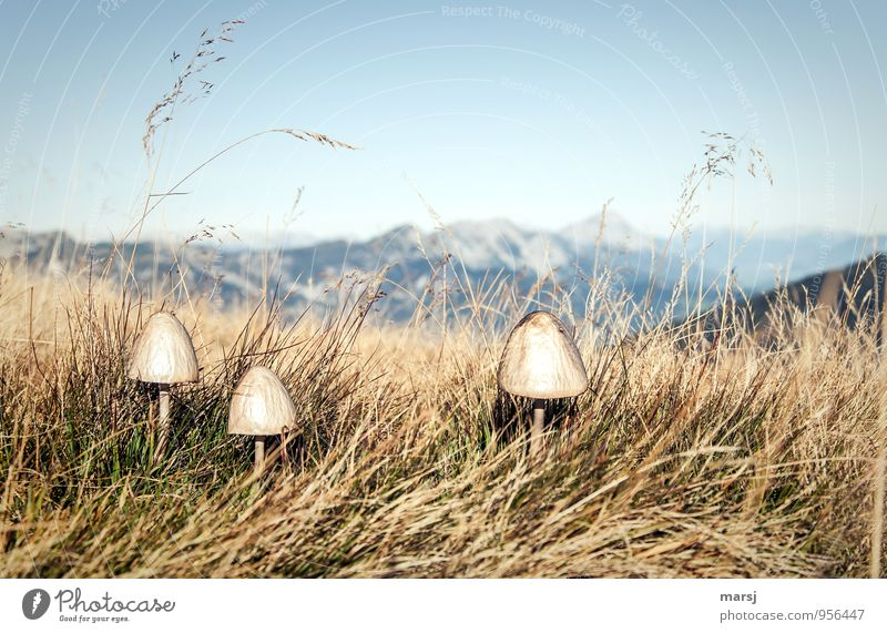 Nature Plant Mountain Autumn Natural Together Power Gloomy Authentic Beautiful weather Alps Mushroom Grassland Unwavering Wild plant Tuft of grass